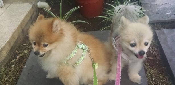 O cão Whiskey (à esq.), da raça spitz, foi roubado em junho de 2015, no Tatuapé, em São Paulo