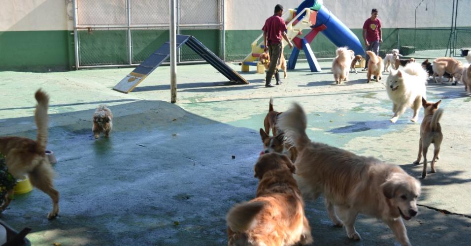 Planet Dog Resort, que é creche, hotel e spa para cães, em São Paulo