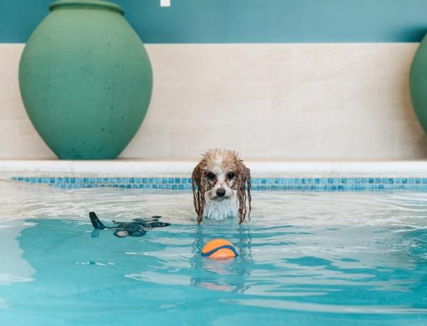 A cachorra Bella brinca na piscina do Olde Towne Pet Resort, em Rockville, Maryland