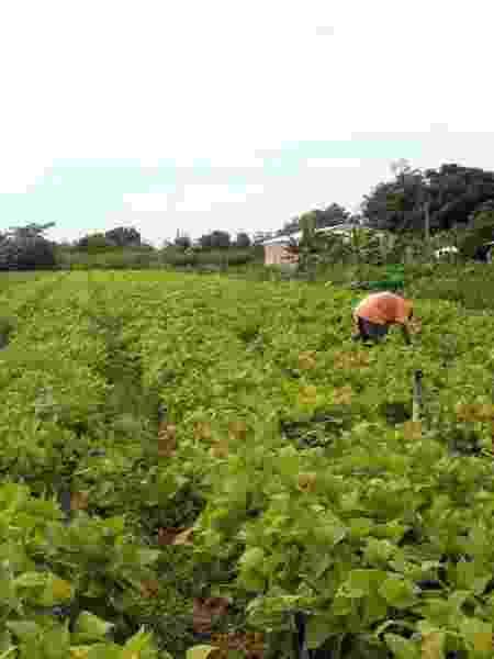 Deputados afirmam que agricultores de baixa renda sofrem na pandemia e não foram contemplados pelo governo federal - Elza Fiúza/Agência Brasil