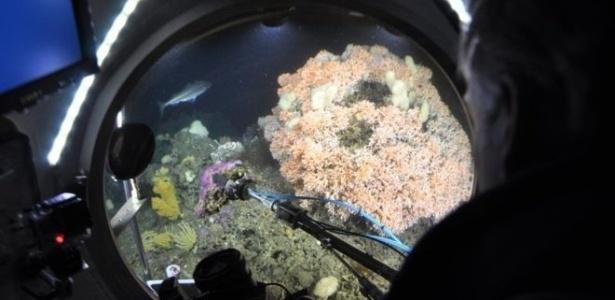 Corais de água fria são menos afetados do que os de água quente com o aumento do pH dos oceanos
