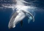 As justificativas do Japão para liberar a caça de baleias após 30 anos de proibição - Barcroft Media