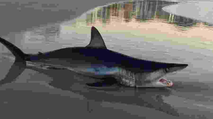 Imagens de tubarão anequim morto em praia de Itapema (SC) circulam pelas redes sociais - Reprodução/Facebook/Visor Notícias