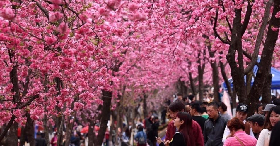 14.mar.2016 - Visitantes passeiam entre cerejeiras no parque Yuanyongshan, em Kunming, na China. As árvores estão florescendo e o parque fica cheio de turistas que querem admirar a beleza das flores
