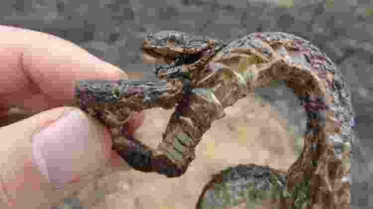 Um filhote de cobra carbonizado por um incêndio florestal - Izar Aximoff