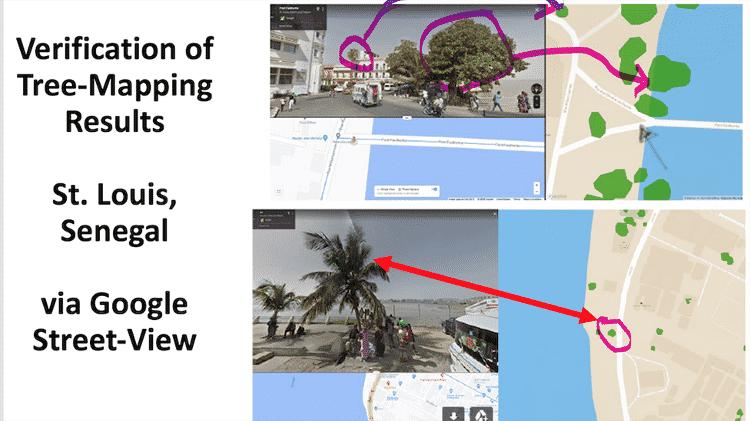 Os pesquisadores também usaram o Google Maps para verificar a presença de árvores em áreas povoadas da área estudada - Compton Tucker - Compton Tucker