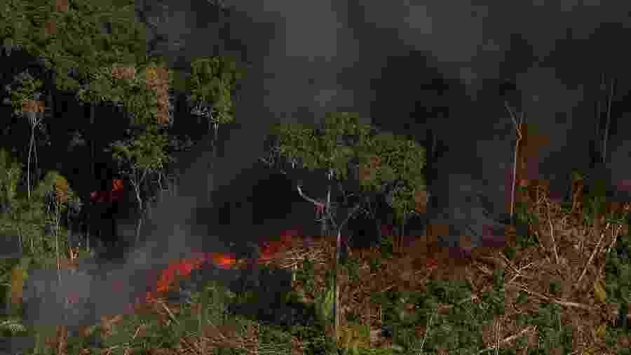 Queimadas em Rondônia, próxima à Flona do Jacundá, em agosto deste ano - Bruno Kelly/Amazônia Real