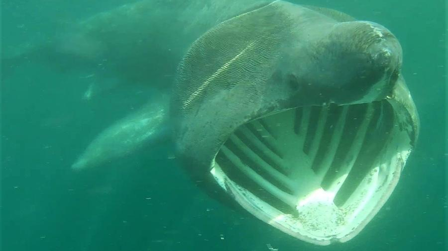 Tubarão-frade foi encontrado por atleta no Reino Unido - Rupert Kirkwood/The Lone Kayaker