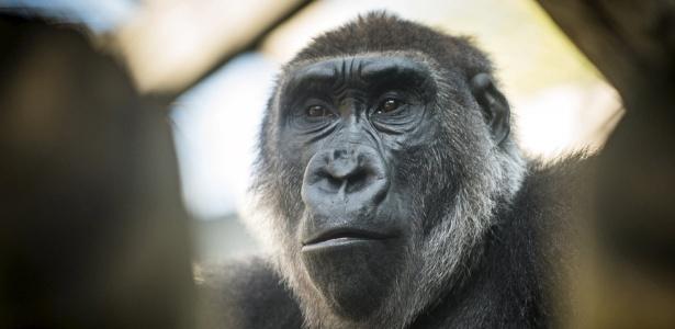 Reuters/ Columbus Zoo and Aquarium/Amanda Carberry/Handout via Reuters