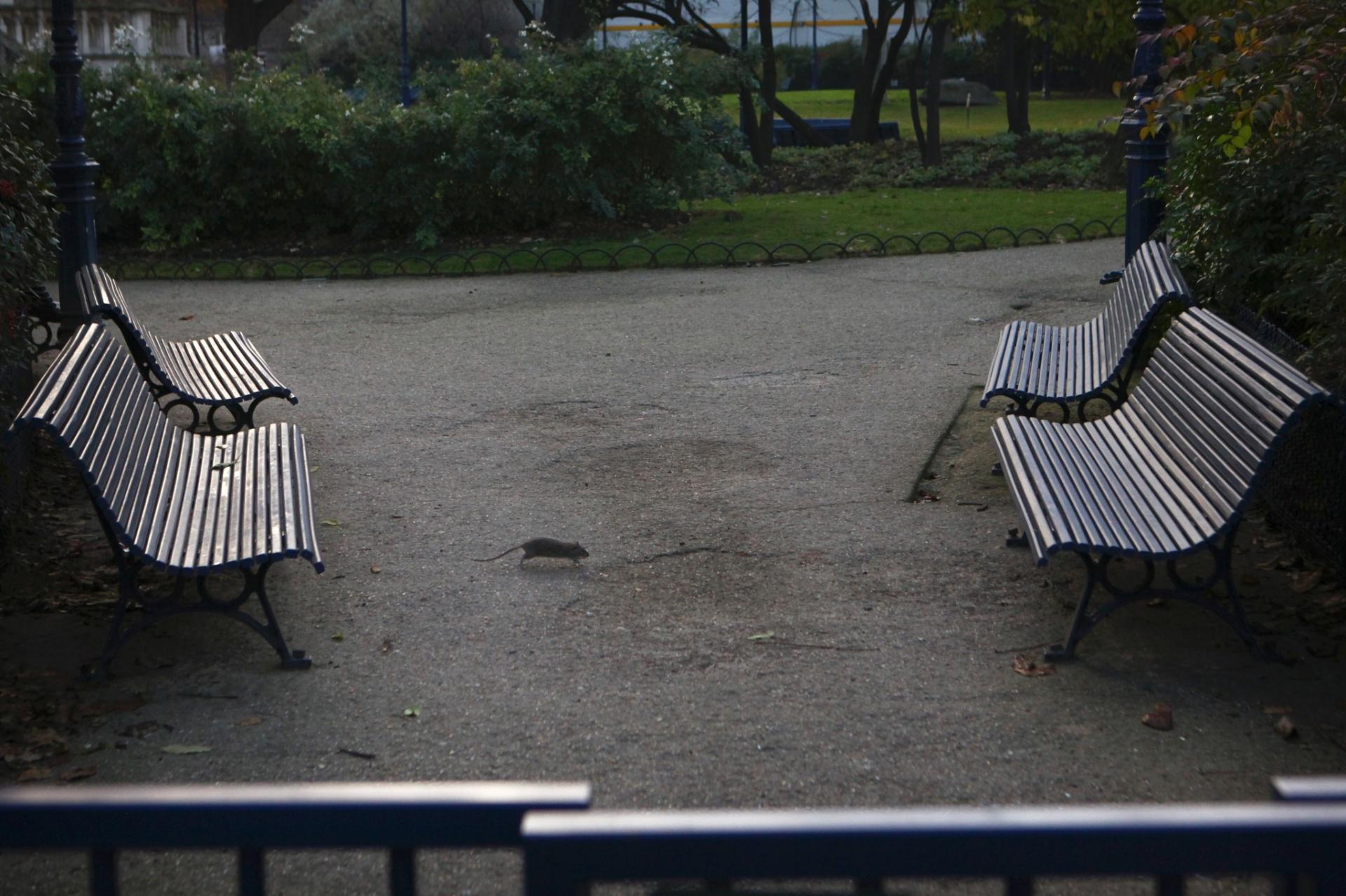 Rato em praça de Paris, que vive a pior crise em décadas