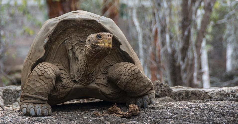 Tartaruga do Parque Nacional de Galápagos, no Equador
