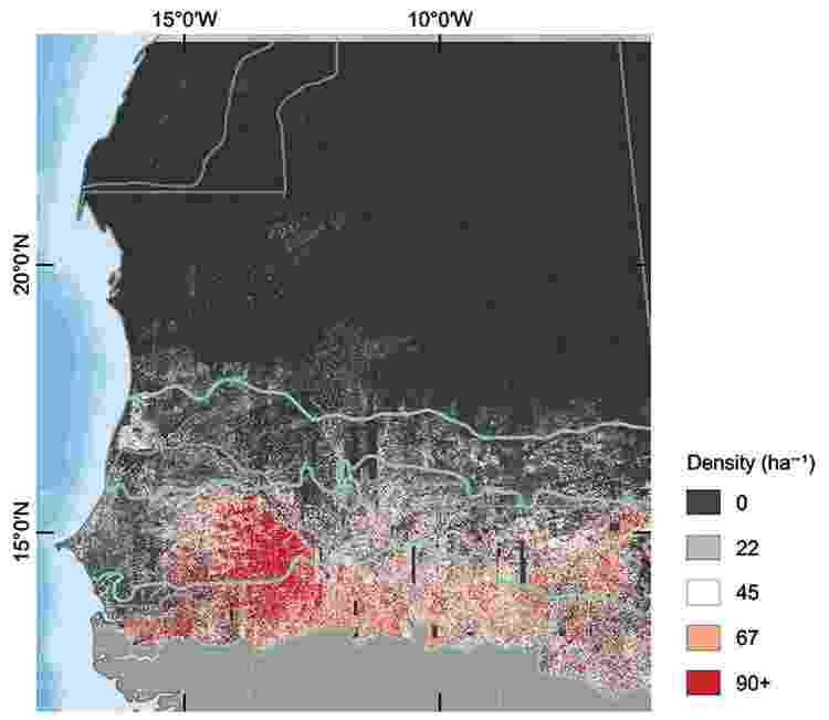 Neste mapa, é possível ver o número de árvores por hectare na área estudada - Martin Brandt - Martin Brandt