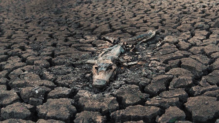 Amazônia ainda lidera em focos de incêndio, mas Pantanal teve alta de 120% em 2020 - Reprodução MOV
