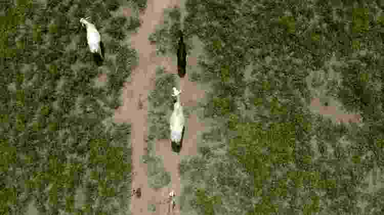 Visão aérea de pastagem com bois - BBC - BBC