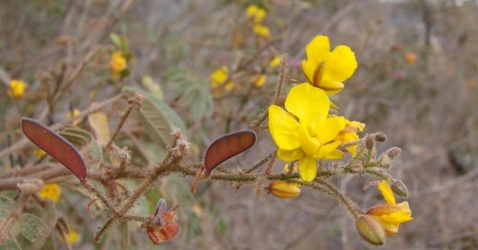 Flores no Parque Estadual do Biribiri, próximo a Diamantina (MG)