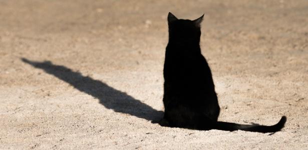 A polícia encontrou em um dos gatos vira-latas algo que parecia ser sangue humano