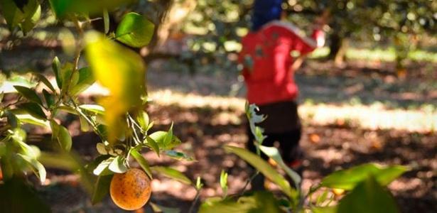 Pesquisa mundial | Comida está na mão de poucos, e agricultor fica pobre, diz estudo