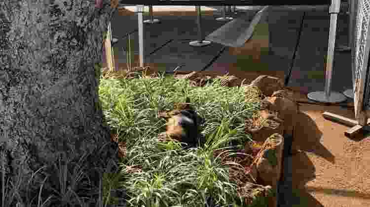 Alvorino deitado em jardim na frente do Alvorada - Reprodução - Reprodução