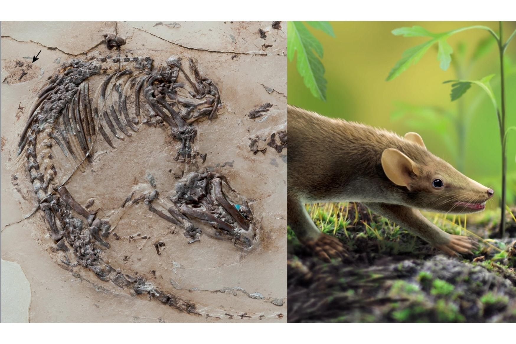 Extinção de dinossauros foi 'azar', diz estudo