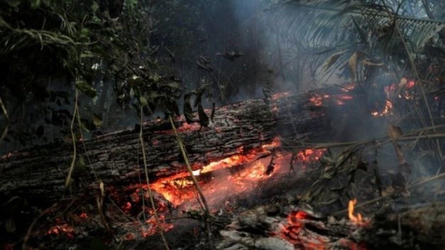 Estudo mostra crescimento do desmatamento no Brasil nos últimos 12 meses - Reuters