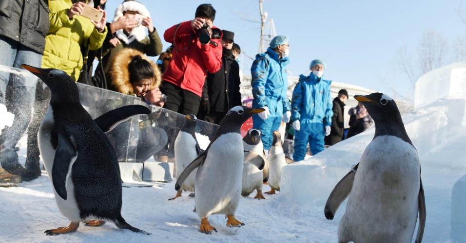 26.dez.2016 - Pessoas observam a movimentação dos pinguins do parque temático Harbin Polarland, na China, nesta segunda (26)