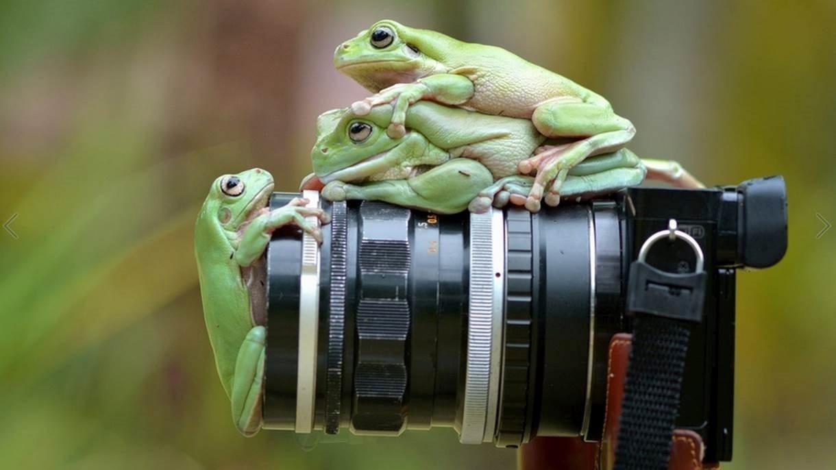 Geralmente, ele utiliza lentes de 100mm, mas troca por uma MP E 65mm quando faz fotos bem de perto buscando close-ups extremos.