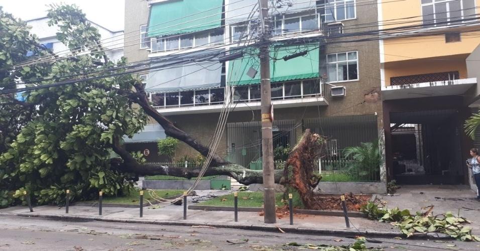15.fev.2018 - Uma das árvores caídas pela forte chuva que atingiu o Rio fica na rua Cambaúba, na Ilha do Governador