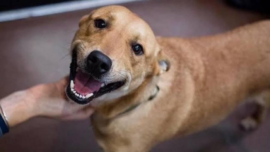 Família recebe carta anônima com ameaça de morte a cachorra em SP - Arquivo Pessoal
