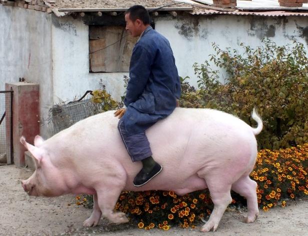 O fazendeiro Zhang Xianping monta em seu porco de estimação chamado Big Precious (Grande Precioso) em Zhangjiakou, na China. Criador de porcos, Zhang decidiu criá-lo como animal de estimação quando Big Precious atingiu os 600 kg