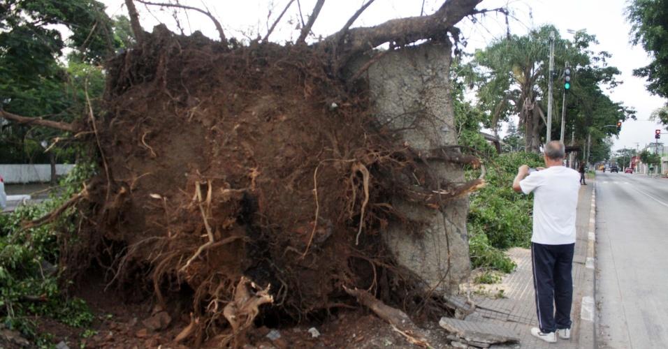 12.nov.2015 - Árvore cai na avenida Atlântica, no bairro de Socorro, zona sul de São Paulo, em decorrência de forte chuva que atingiu a cidade