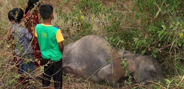 Crianças observam elefante morto após ser atropelado por trem