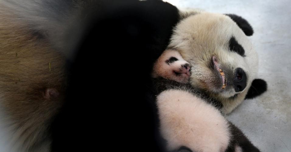 9.set.2016 - Um filhote de panda gigante dorme nos braços da mãe, em Xangai, na China. A fêmea, de apenas dois meses, foi chamada de amendoim