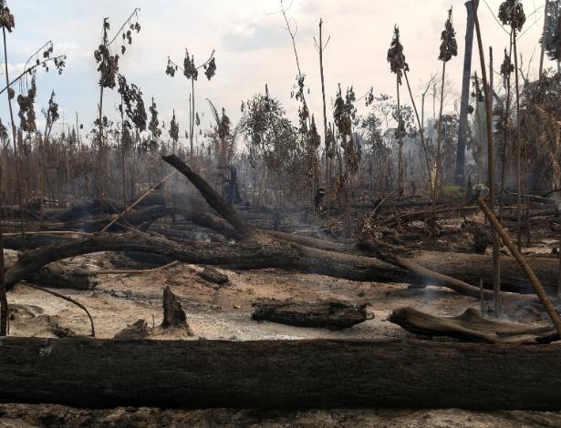 Estudo não permite afirmar que o desmatamento esteja ocorrendo deliberadamente com o objetivo de reduzir proteções ambientais - Bruno Kelly/Reuters