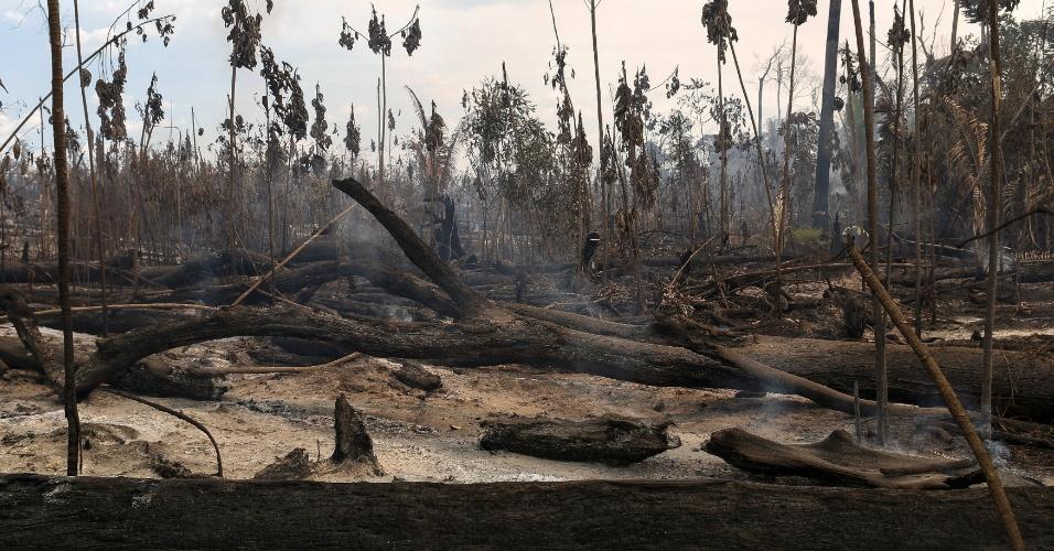 Agentes do Ibama checam tora de madeira, durante apreensão realizada pela 'Operação Onda Verde', em Apuí (AM)