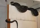 Homem fica chocado ao encontrar cobra de três metros em seu porão