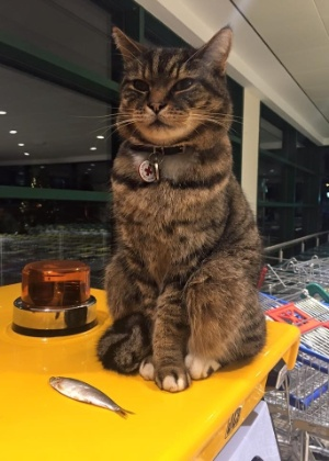 """Brutus no supermercado na Inglaterra - Facebook/ Brutus """"The Morrisons Cat"""""""