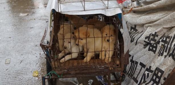 Filhotes são vistos em jaula em mercado de carne de cachorro em Yulin, na China