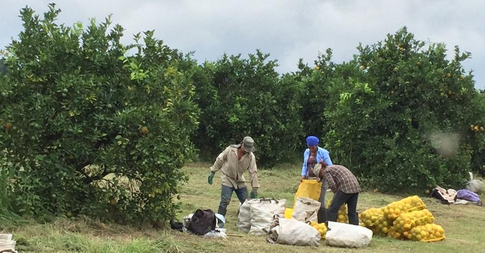 Laranjas Online - Fazenda São Pedro