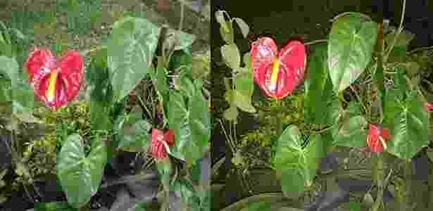 Foto da direita tirada sem flash/ Esquerda tirada com flash - UOL
