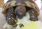 Tartaruga foge e é encontrada 9 meses depois a 200 metros de casa - BBC