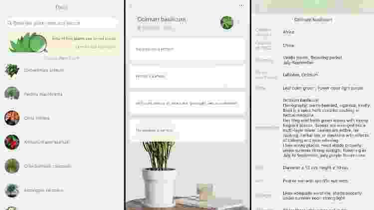 Telas do app que controla o sensor para plantas Flower Care, da Xiaomi - Reprodução - Reprodução