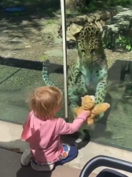 Onça de zoológico na Filadélfia (EUA) interage com bebê - Reprodução/Instagram