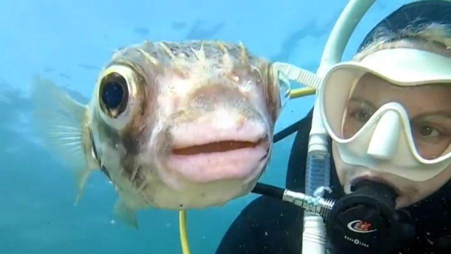 Mergulhadora australiana grava vídeo com baiacu no fundo do mar - Reprodução/Instagram