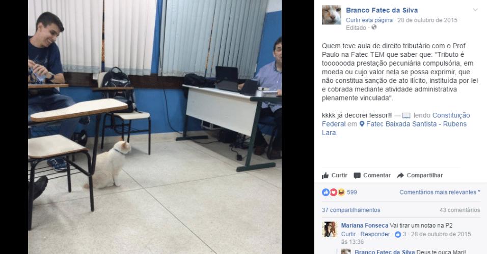 O gato Branco ganhou uma página no Facebook para mostrar suas traquinagens