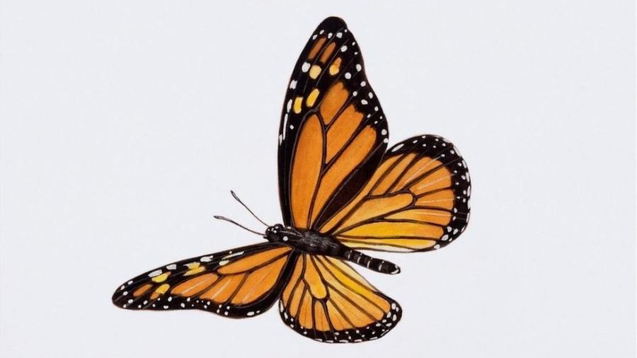 A população de borboletas-monarca caiu 86% em 2018 na Califórnia, de acordo com um estudo - Getty Images