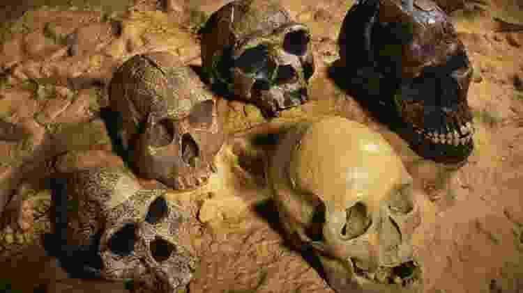 Os cérebros dos humanos modernos (no topo e na parte inferior à direita) são maiores do que os dos membros mais antigos da família humana. O domínio do fogo teria ajudado a aumentar o tamanho do nosso cérebro? - Science Photo Library - Science Photo Library