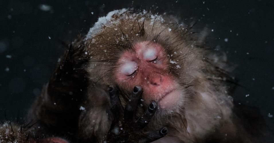 18.jan.2016 - Em meio à neve, macacos-japoneses brincam entre si em água quente no Parque de Macacos Selvagens Jigokudani, na cidade de Yamanouchi, no Japão. O parque atrai cada vez mais turistas a cada ano. O número de visitantes aumentou em 20% comparado ao mesmo período do ano anterior