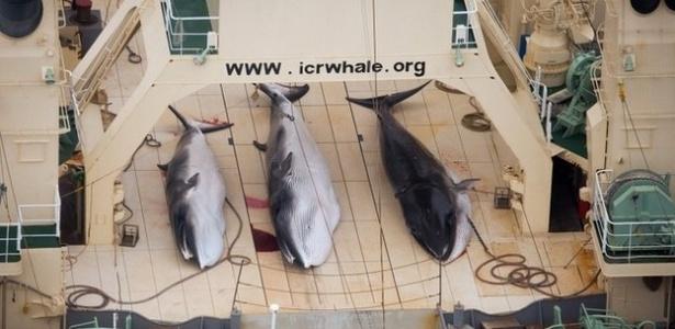 Ativistas acusam o projeto japonês de 'caça ilegal de baleias'