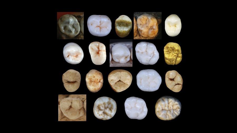 Amostras de dentes de hominídeos encontrados na caverna Sima de los Huesos, na Espanha - Aida Gomez-Robles/University College London/AFP