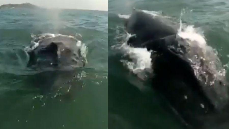 Autora do vídeo disse que não se assustou com a presença do animal - Reprodução/Instagram